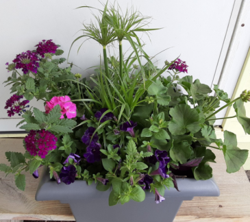 large combo pot plants will vary