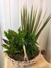 Large dish garden basket plants