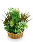 Large Basket Garden Plant