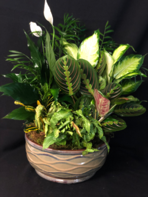 Large Euro Ceramic Dish Garden  in Forney, TX | Kim's Creations Flowers, Gifts and More