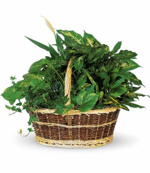 Large Garden Basket Green Plant in Rossville, GA | Ensign The Florist