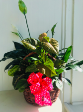 Large Garden Basket with Bow