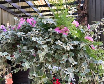 Large Hanging Baskets Coconut Liners