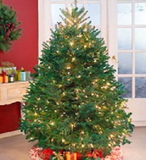 Cut Large Holiday Tree send someone Christmas in Bowerston, OH | LADY OF THE LAKE FLORAL & GIFTS