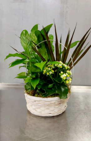Large Mixed Green Plant Plants
