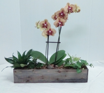 Large Orchid Garden