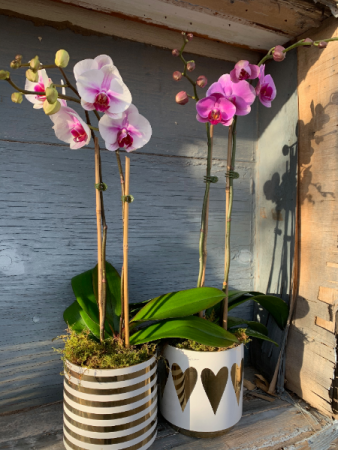 Large Orchid in Seasonal Planter Plants