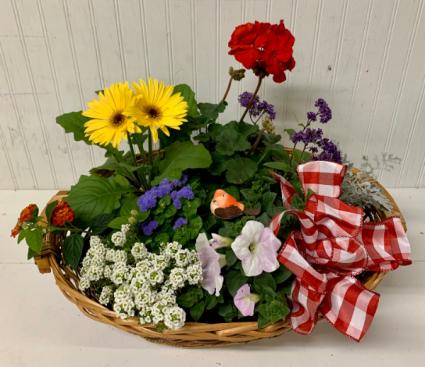 Large Oval Basket of Plants