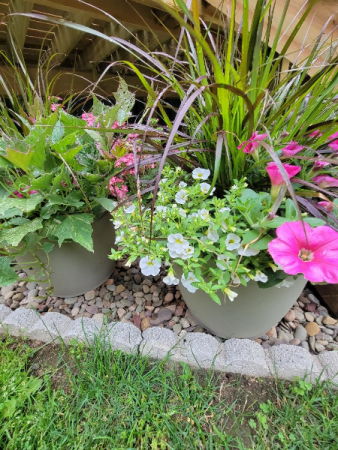 Large Patio Pots                                  Blooming plants