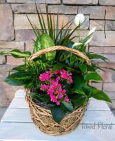 Large Plant & Blooming Basket