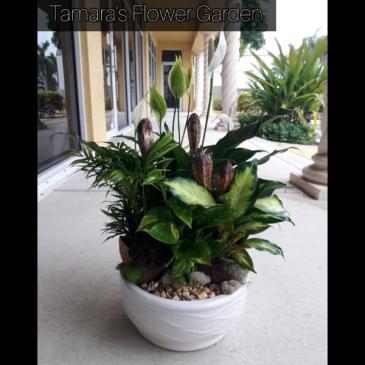 Large Plant Composition
