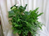 Large Garden Plants