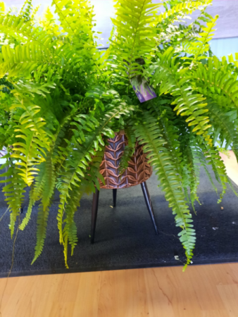 Large Plant stand and fern