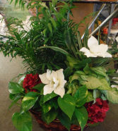 Large planter basket