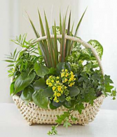 Large Planter Basket PL4 Basket Garden Green Plants
