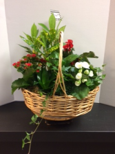 Large planter basket Plant