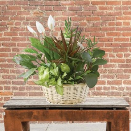 Large Planter in Basket