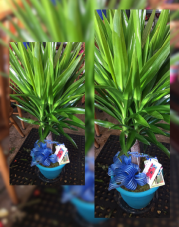 Large Plants  Green plants, may vary,