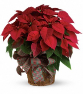 Large Red Poinsettia Christmas