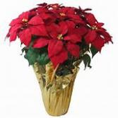 Large Red Pointsettia Also available in pink, white or marble