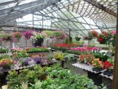 Large selection of plants for all areas hanging, dish gardens, outdoor planters