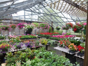 Large selection of plants for all areas hanging, dish gardens, outdoor planters in Kensington, CT | BRIERLEY-JOHNSON THE FLORIST