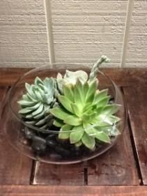 Large Succulent Arrangement Clear Dish