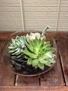 Large Succulent Arrangement Clear Dish