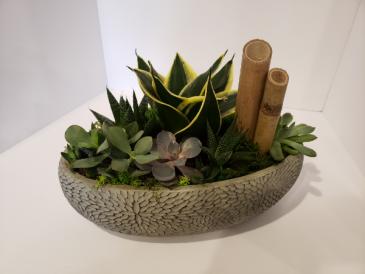 Large succulent garden Plants