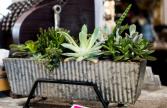 large Succulent Plamter PLANTS