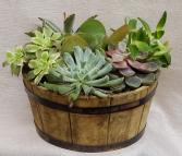 Large Succulent Dish Garden Plant