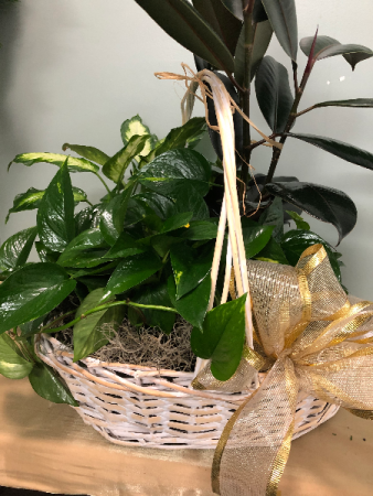 Large White Planter Basket Dish garden