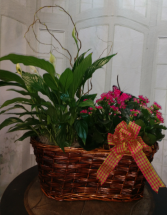 Larger Double Plant Basket Kalanchoe and Green Plant Combo