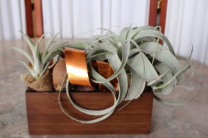 Las Vegas Flowers Tillandsia Xerographica Air Plant in Las Vegas, NV | AN OCTOPUS'S GARDEN