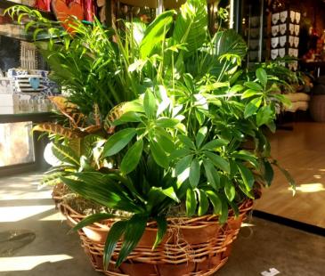 Laundry Basket of Plants Plant