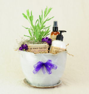 Lavender Lover's Dream II Gift Box Plant & Locally Made Pottery in Brattleboro, VT | WINDHAM FLOWERS