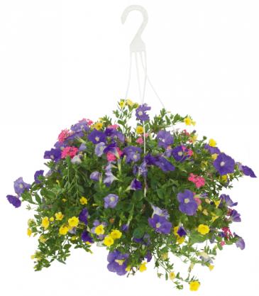 Lavender, Yellow & Pink Mixed Basket Hanging Basket
