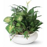 Lavish Dish Garden Plants