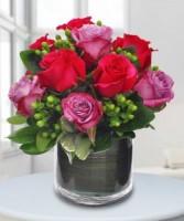 Lavish Roses