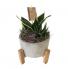 Legged Succulent Planter  Succulent