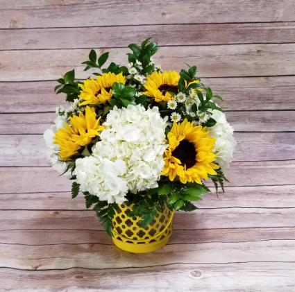 Davis FLORIST - STRELITZIA FLOWER CO.