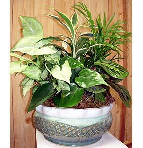 """Lg 15"""" Ceramic Dish Garden"""