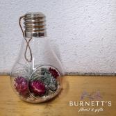 Light bulb Air Planter Plant