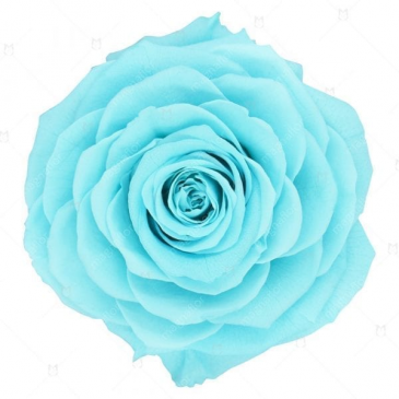 Light Turquoise/Teal Roses