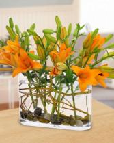 Lily Harvest Arrangement