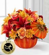 lily pumpkin