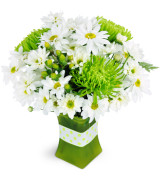 Lime Sublime  Vase arrangement