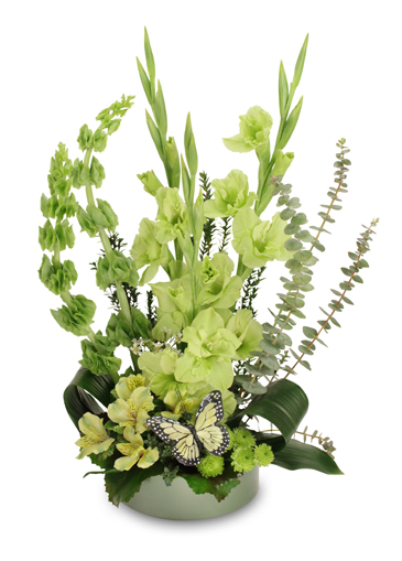 LIME TWIST Arrangement in Terre Haute, IN | BAESLER'S FLORAL MARKET