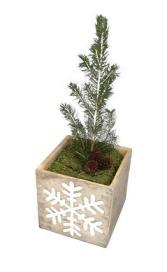 LIVE Christmas tree The