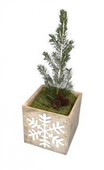 """LIVE Christmas tree The """"Green Christmas"""" tree"""